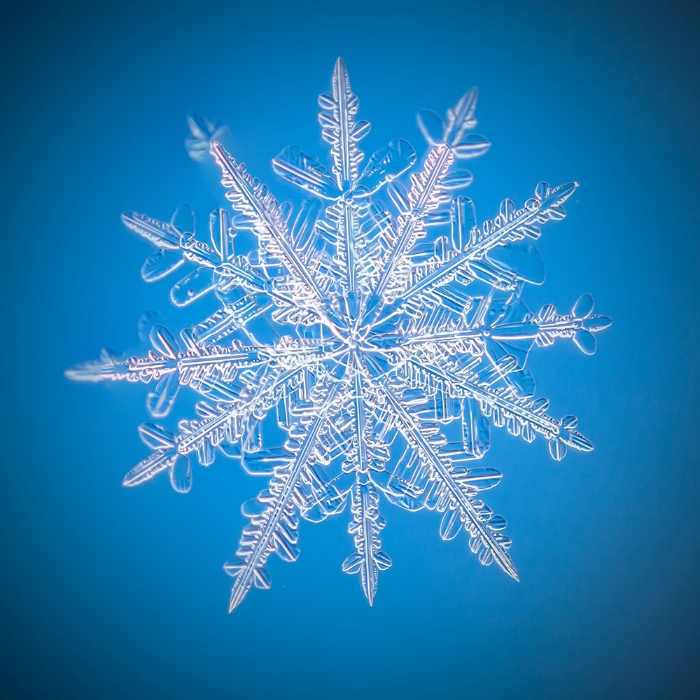 Start with snowflakes to design your digital workplace strategy